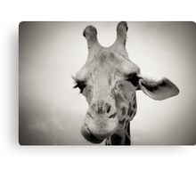 Giraffe I Canvas Print