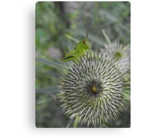 Ouch,Eek,Err...Walking On This Thing Is Really Hard! Canvas Print