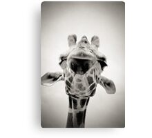 Giraffe II Canvas Print