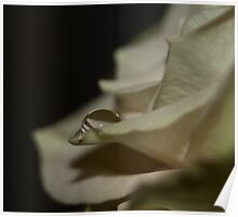 Tear of a Rose Poster