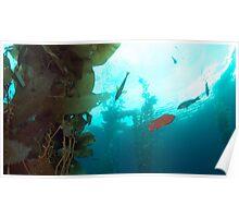 Kelp Life Poster