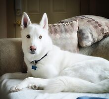 Alaskan King Growing Up by SerenityPhoto