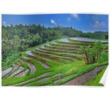 Batukaru rice terraces Poster