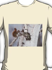 Red Squirrel on Birch Tree T-Shirt
