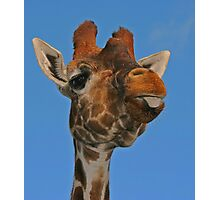 Giraffe Against A Blue Sky Photographic Print