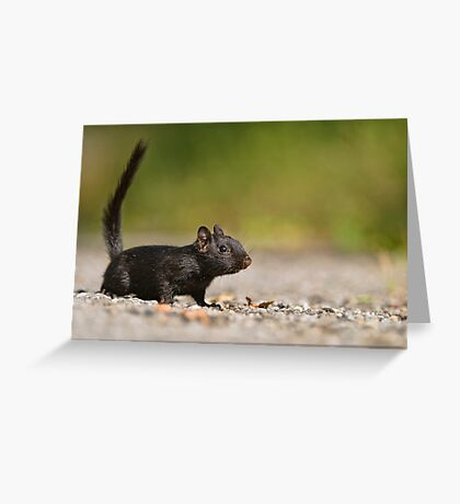 Black Eastern Chipmunk 2 - Ottawa, Ontario Greeting Card