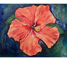 Orange Hibiscus Photographic Print
