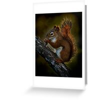 Red Squirrel - Photoshop Manipulation Greeting Card