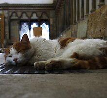 Chapterhouse Cat by Dave Godden