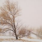 Wyoming Snow by chas48