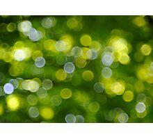 Under the Tree Photographic Print