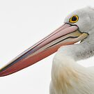 Close Crop - Australian Pelican by Barbara Burkhardt