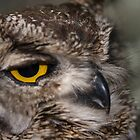 Cape Eagle Owl by wildshot