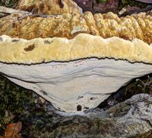 Tearful Polypore - Inonotus Radiatus - Bracket Fungus Sticker