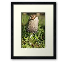 Mushroom in the Grass 2 Framed Print