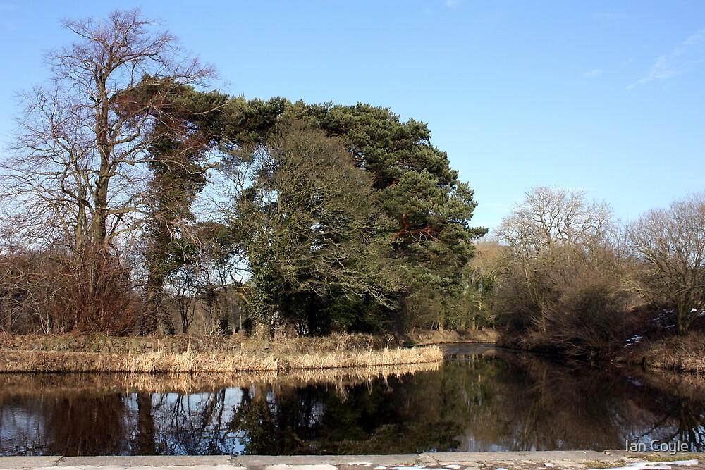 Do the trees talk by Ian Coyle