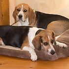 The Beagles. by Lanii  Douglas