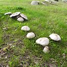 Mushroom tables waiting for the Fairies Party. 'Arilka'. by Rita Blom