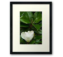 Magnolia 1 Framed Print