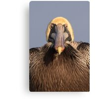 Grumpy Pelican Canvas Print