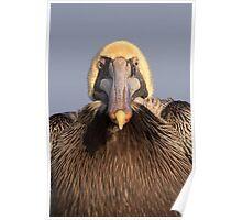 Grumpy Pelican Poster