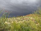 Sonoran Scenery Series ~ 2 ~ Storm over Sonora  by Kimberly Chadwick