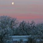 Rose Sunrise in Winter #2 by Ken McElroy