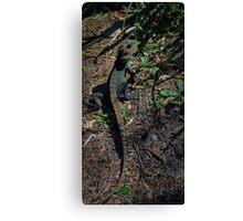 Gippsland Water Dragon. Canvas Print