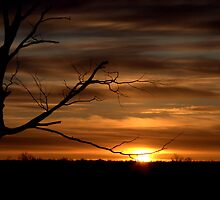 Sunrise in the North by Larry Llewellyn