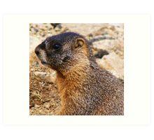 Mr. Marmot Art Print
