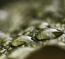 Raindrops On A Leaf by Evita