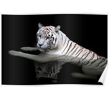 White Tiger, Singapore Zoo Poster