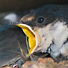 Hungry chick by wildshot