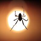 Spider by Rommel Andrew Henricus