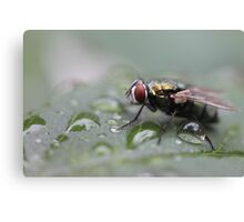 Fly Drops Canvas Print