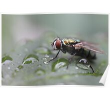 Fly Drops Poster