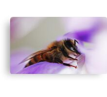 Bee On A Wisteria Flower Canvas Print