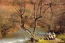 Riverside Picnic. by CJTill