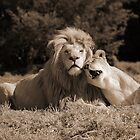 Lion Love by thula