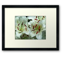 Lillies Framed Print