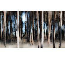 Painted Pine Photographic Print