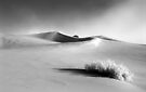 Stovepipe Wells Dunes-B&W by Zane Paxton