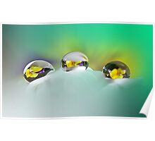 Pansy reflections Poster