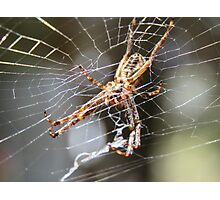 Spider Underbelly Photographic Print