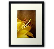 Lily Warming Framed Print