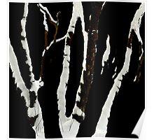 Snowy birches Poster