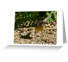 Wagtail action! Greeting Card