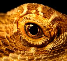 Reptilian Eye by John Marriott