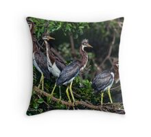 4 Baby Tri Color Herons Throw Pillow