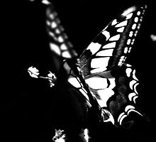 le papillon by Ingrid Beddoes